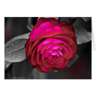 Rosy Camellia Lee Hiller Photography Card