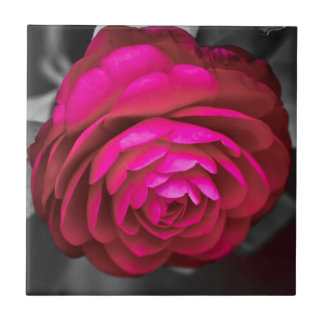 Rosy Camellia Tiles