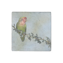 Rosy- faced love bird on a branch stone magnet