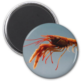 Rosy Lobsterette 2 Inch Round Magnet