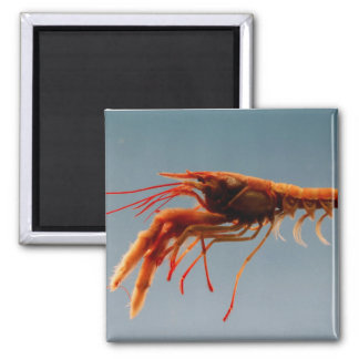 Rosy Lobsterette 2 Inch Square Magnet