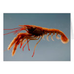 Rosy Lobsterette Greeting Card