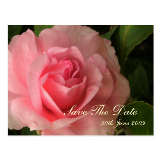 Rosy Pink Save The Date Postcard