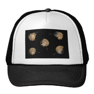 Rotating Brains with Magnifyer Hat