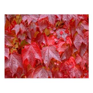 Rote Blätter, Herbstblätter Postcard