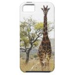 Rothschild Giraffe endangered species iPhone 5 cas iPhone 5 Cover