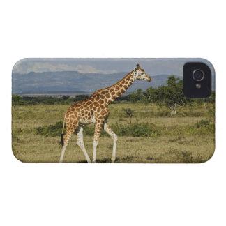 Rothschild s Giraffe Giraffa camelopardalis Blackberry Bold Case