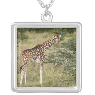 Rothschild's Giraffe eating, Lake Nakuru Silver Plated Necklace