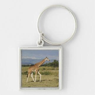 Rothschild's Giraffe, Giraffa camelopardalis Keychain