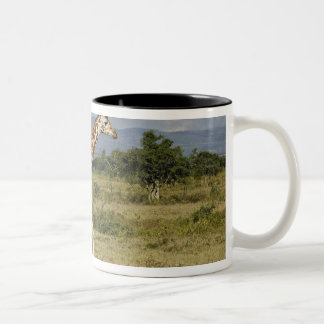 Rothschild's Giraffe, Giraffa camelopardalis Two-Tone Coffee Mug