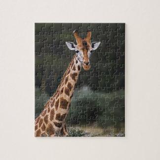 Rothschild's Giraffe, Lake Nakuru National Park, Jigsaw Puzzles