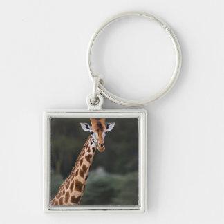 Rothschild's Giraffe, Lake Nakuru National Park, Keychain