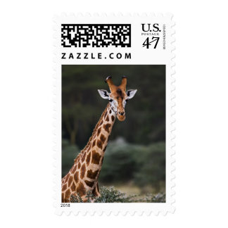 Rothschild's Giraffe, Lake Nakuru National Park, Postage