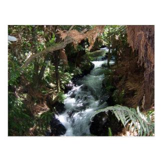 Rotorua NZ Salmon Stream Postcard