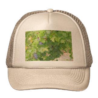 Rotta Dry Farmed Grapes on the Vine Trucker Hat