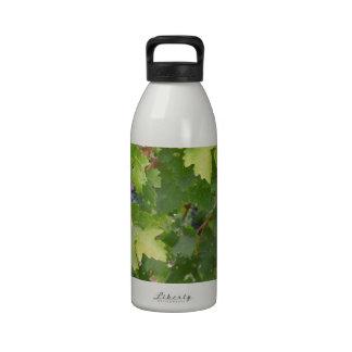 Rotta Dry Farmed Grapes on the Vine Reusable Water Bottles
