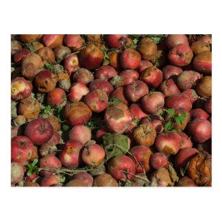 Rotten Apples Postcard