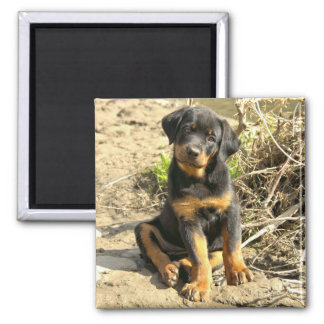 Rotti Pup Magnet