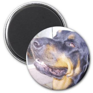 Rottie 2 Inch Round Magnet