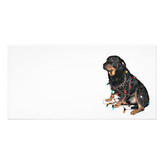 Rottie Christmas booboo Card