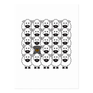 Rottie in the Sheep Post Cards