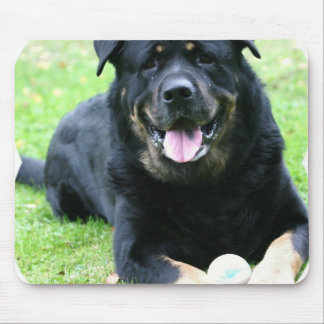 Rottie  Mouse Pad