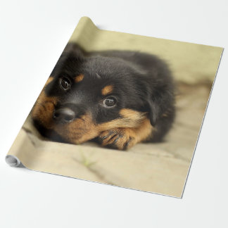 Rottweiler20150901 Wrapping Paper