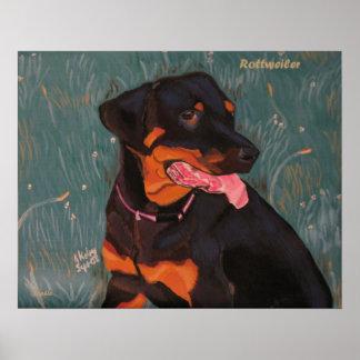 Rottweiler 1 poster