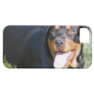 rottweiler-2.jpg iPhone 5 covers