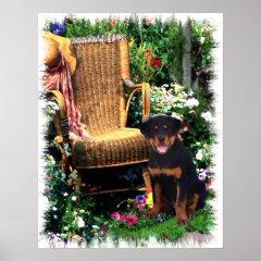 Rottweiler Art Print print