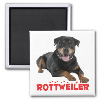 Rottweiler Black And Brown Puppy Dog Red Love Magnet