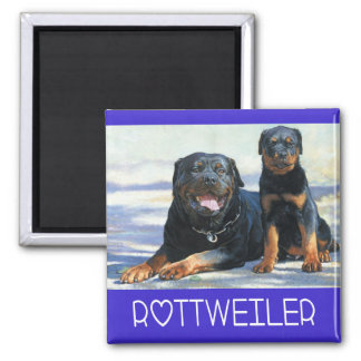 Rottweiler Brown And Black Puppy Dog Blue Love Magnet