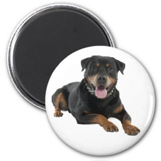 Rottweiler Brown and Black Puppy Dog Magnet