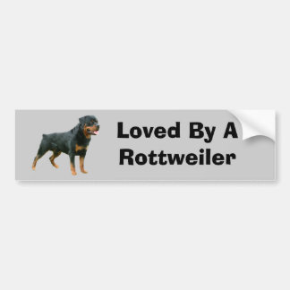 Rottweiler Bumper Sticker Car Bumper Sticker