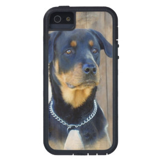 Rottweiler Cover For iPhone 5