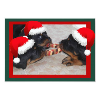 Rottweiler Christmas: A Time of Joyous Giving 3.5x5 Paper Invitation Card