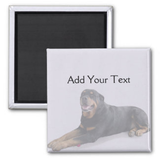 Rottweiler descolorado que coloca en el imán gris