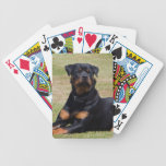 Rottweiler dog beautiful photo, gift card deck