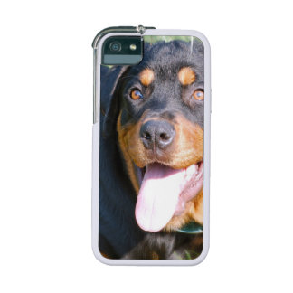 Rottweiler Dog iPhone 5 Cases