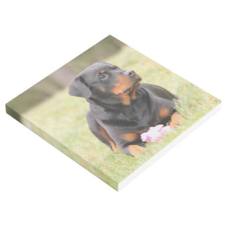 Rottweiler Dog Gallery Wrap
