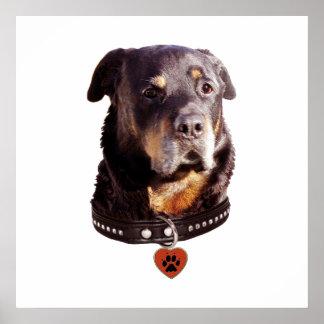Rottweiler Dog Heart Pawprint Poster