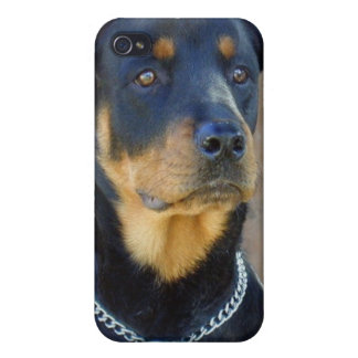 Rottweiler Dog iPhone Case iPhone 4 Cover