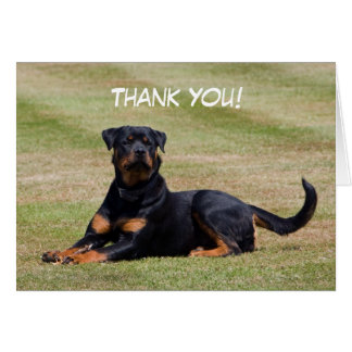 Rottweiler dog photo thank you greetings card