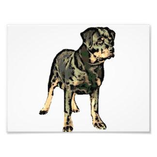 Rottweiler Dog Photo Print