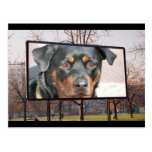 Rottweiler Dog Postcard