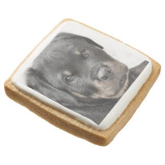 Rottweiler dog square shortbread cookie