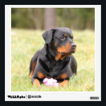 """Rottweiler Dog Wall Decal<br><div class=""""desc"""">A rottweiler dog is featured on this reusable wall decal. Great for any room as they can be reused up to 100 times without harming your walls.  ..</div>"""