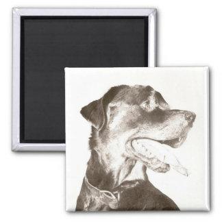 Rottweiler Drawing Canine Art Portrait magnet