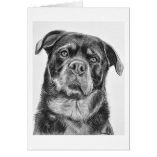Rottweiler Drawing Card