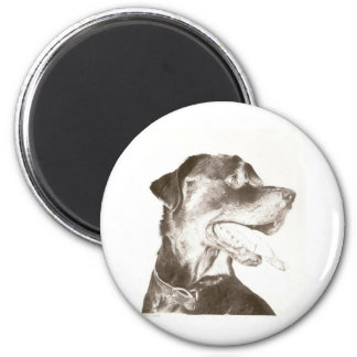 Rottweiler Drawing Magnet Canine Art Portrait